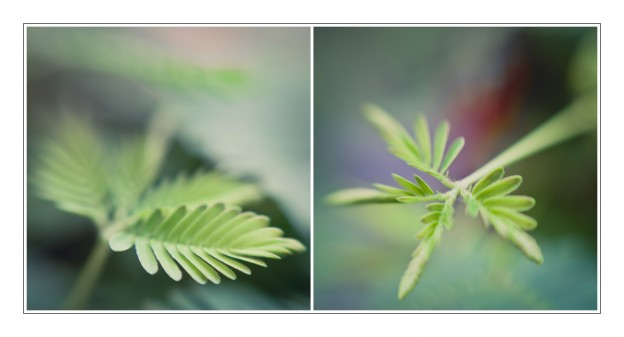 kleine pflanze